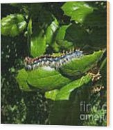 Caterpillar Photograph Wood Print