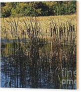 Cattail Duck Cover Wood Print