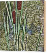 Cattails Along The Pond Wood Print