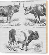 Cattle Breeds, 1856 Wood Print by Granger