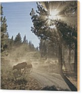 Cattle Cross A Gravel Road On A Fall Wood Print