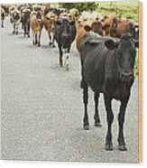 Cattle Drive On A Road  Wood Print