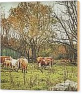Cattle Gazing On Remaining Green Grass Wood Print
