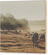 Cattle Grazing On Misty Morning Wood Print