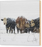 Cattle In A Snowstorm In Southwest Michigan Wood Print