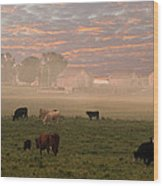 Cattle In The Fog Wood Print