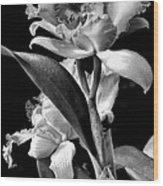 Cattleya - Bw Wood Print by Christopher Holmes