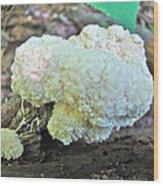 Cauliflower Mushroom On Log Wood Print