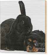 Cavalier King Charles Spaniel And Rabbit Wood Print