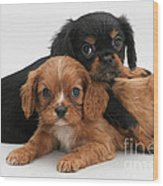 Cavalier King Charles Spaniel Puppies Wood Print