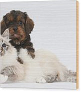 Cavapoo Pup And Tabby-point Birman Cat Wood Print