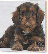 Cavapoo Pup Wood Print