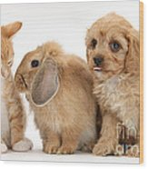 Cavapoo Pup, Rabbit And Ginger Kitten Wood Print by Mark Taylor