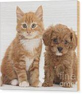 Cavapoo Puppy And Kitten Wood Print