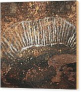 Cave Painting Of A Witchittey Grub Wood Print