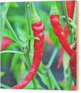 Cayenne Peppers Wood Print