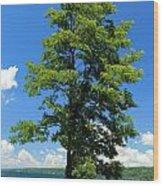 Cayuga Picnic Wood Print