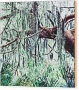 Cedar Draped In Spanish Moss Wood Print