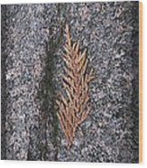 Cedar On Granite Wood Print