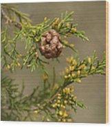 Cedar Rust Gall - Gymnosporangium Juniperi-virginianae Wood Print
