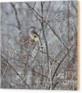 Cedar Wax Wing 3 Wood Print