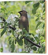 Cedar Waxwing Among Apple Blossoms Wood Print