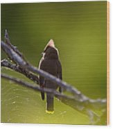 Cedar Waxwing Perched In Tree Wood Print