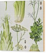 Celery - Fennel - Dill And Celeriac  Wood Print by Elizabeth Rice