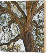 Centenarian Cork Tree Wood Print