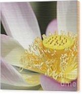 Center Of A Lotus Wood Print