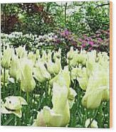 Central Park Tulips Wood Print