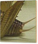 Cerci Of Cave Cricket Wood Print