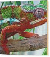 Chameleon Close Up Wood Print