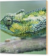 Chameleon In The Forests Of Mt Meru Wood Print
