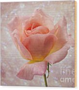 Champagne Rose. Wood Print