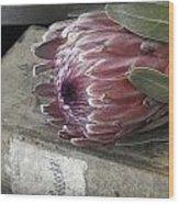 Protea Still Life Wood Print