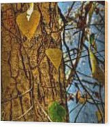 Changing Leaves And A Cottonwood Trunk Wood Print