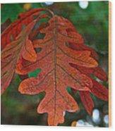 Changing Oak Wood Print