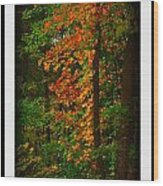 Changing Seasons Wood Print