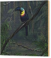 Channel Billed Toucan Wood Print