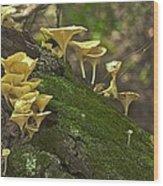 Chanterelles 8681 Wood Print