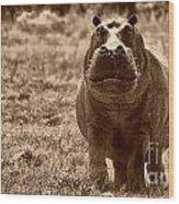 Charging Hippo Wood Print