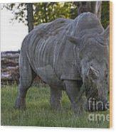 Charging Rhino. Wood Print