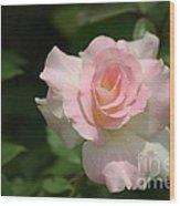 Charles Aznavour Rose Wood Print