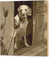 Charleston Shop Dog In Sepia Wood Print