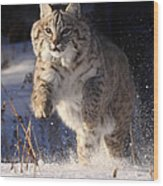 Chase In The Snow Wood Print