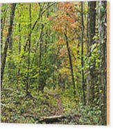 Chatooga Forest Trail Wood Print