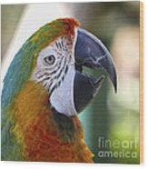 Chatty Macaw Wood Print