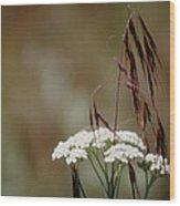 Cheatgrass And Common Yarrow Wood Print