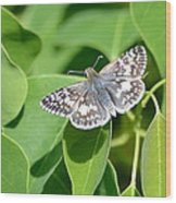 Checkered Skipper Wood Print